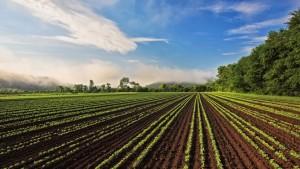 Gaia Herb Farm